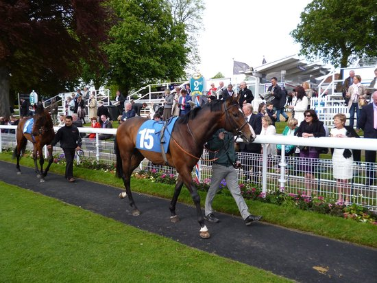 York Racecourse: the paddock for a close up of the horses and to make your winning selection!