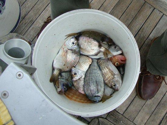Bom Dia Boats: Our catch