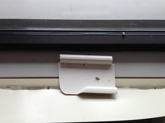 Quality Inn Forest City: Dead bugs in room