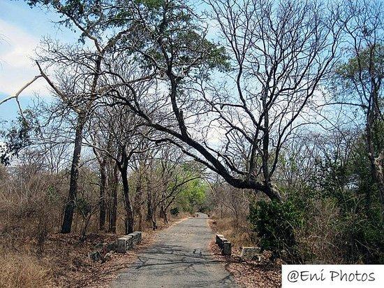 Baluran National Park : Baluran 2