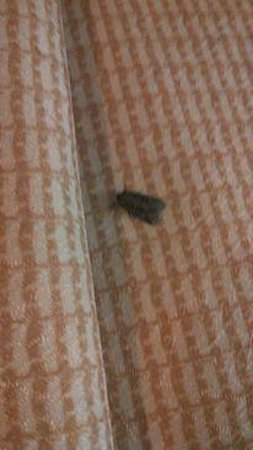 Red Roof Inn Sacramento - Elk Grove: Bugs In Room