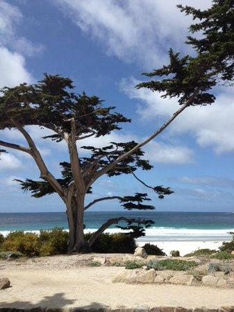 La Playa Carmel: Walking to Carmel beach