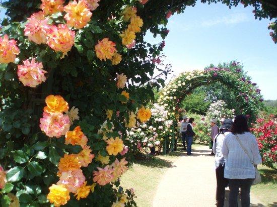 Keisei Rose Garden: bara no a-ti