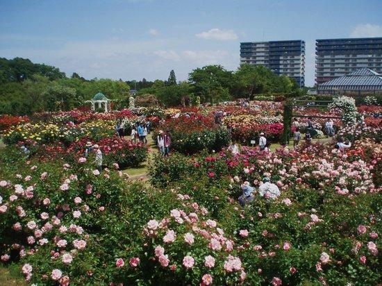 Keisei Rose Garden: keisei baraenn