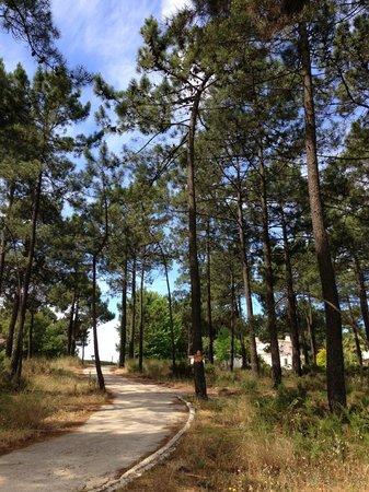 Aroeira Golf Resort : Golf pathway
