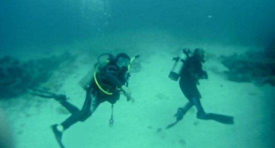 Seamonkey's Scuba Diving: Discover Scuba Dive with Colleen @ Seamonkey On Islamorada's Alligator Reef