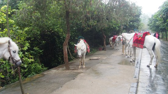 China and Vietnam Friendship Pass: Horses available for riding up the hills