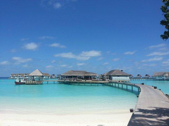 Centara Grand Island Resort & Spa Maldives: reception and coralbar