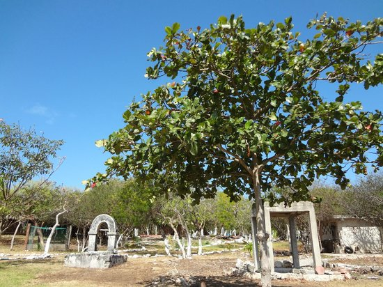 Hacienda Mundaca: nice place