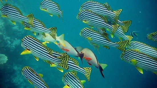 Bandos Maldives: Bandos Island Resort