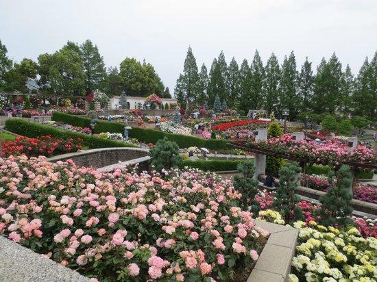Aramaki rose garden: 車椅子も移動可能です。