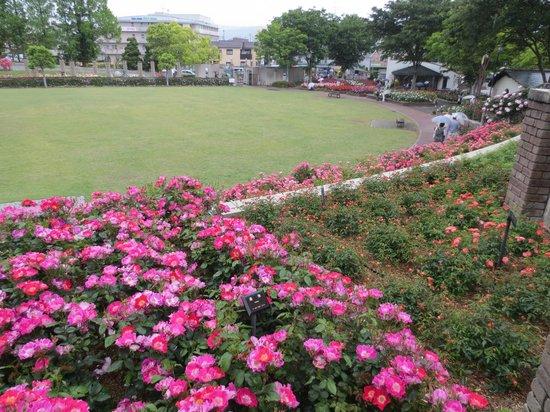 Aramaki rose garden: 円の中央に芝生広場があります。