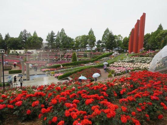 Aramaki rose garden : 雨の日の散策です。