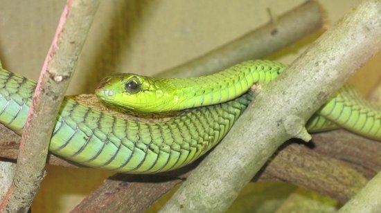 Riverbend Crocodile Farm: serpente