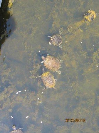 Turtle Heaven Newport News Park off the Bridge