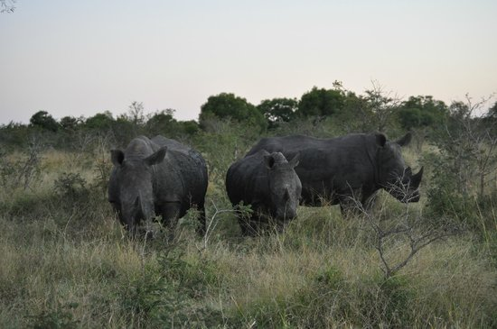 andBeyond Ngala Tented Camp: Rhinos