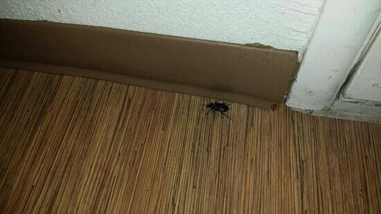 Motel 6 South Haven: keeping us company... we had already killed one of his companions