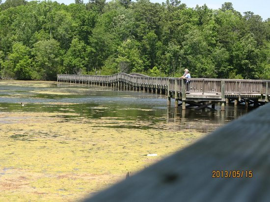 Newport News, فيرجينيا: The bridge where the turtles are