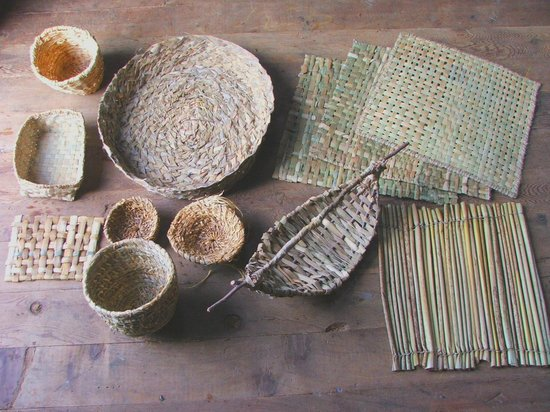 Cattail Creations: Learn about proper harvesting, drying, different ways to work with its fibres, and how to make a
