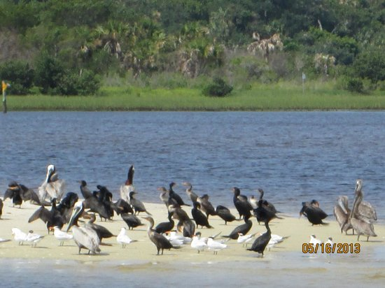 Tidewater Tours: Terns & pelicans