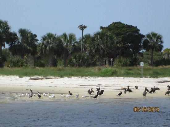 Tidewater Tours: Osprey with chicks