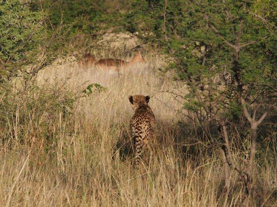 Morukuru Family Madikwe: The Hunt