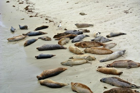 Children's Pool: Seals on the beach
