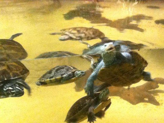 Alligator Alley Adventures: Turtles