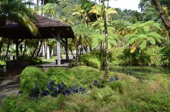 Jardin de Balata: La mare