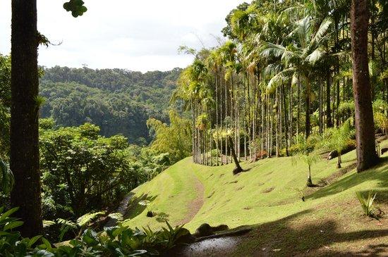 Jardin de Balata: Vue sur la forêt