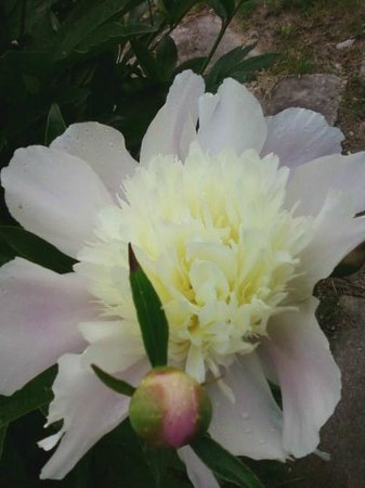 T.C. Steele State Historic Site : Beautiful blooms