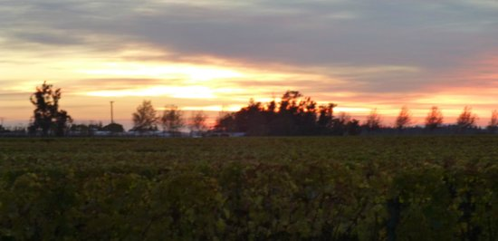 Marlborough Vintners Hotel: Sunrise over the vines