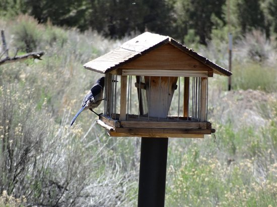 Big Bear Discovery Center: Bird on feeder out back
