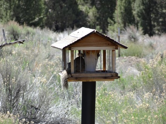 Big Bear Discovery Center: Squirrel on feeder after bird left