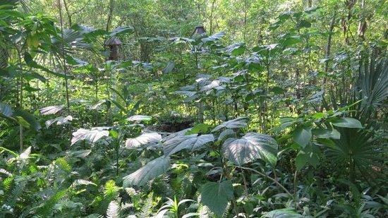 Cinnamon Inn Bed & Breakfast: Gorgeous Garden