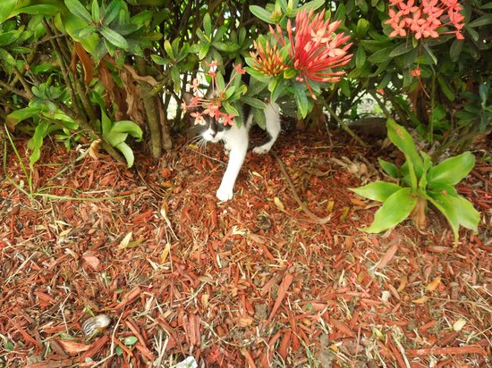 Coconut Bay Beach Resort & Spa: Our friendly kitten,we saw her every day!