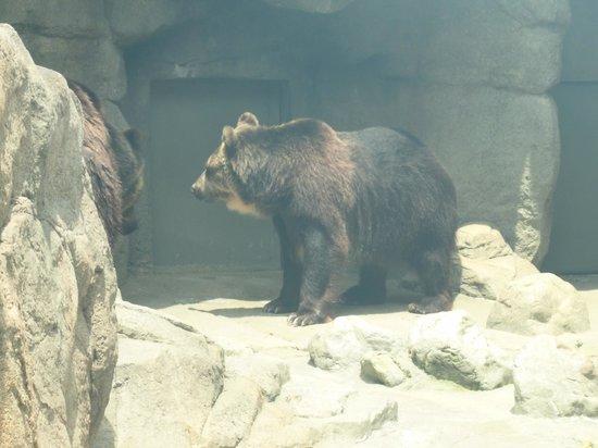 Kobe City Oji Zoo: クマ