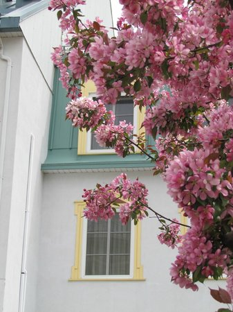 Place St-Bernard : Spring blooms by the hotel window