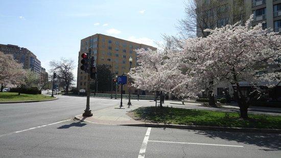 The Embassy Inn: Cerezos en flor