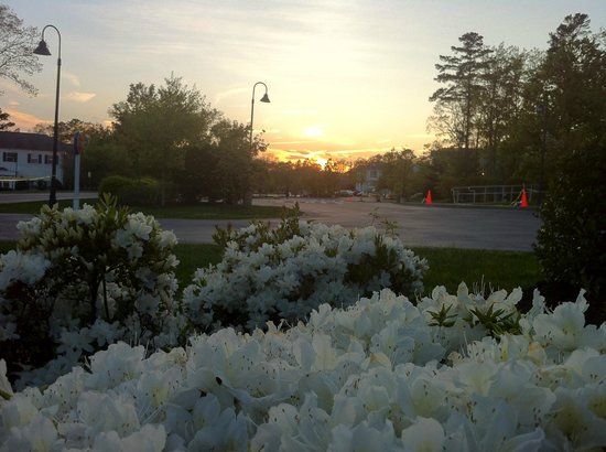 Marriott's Fairway Villas: Flowers around the property