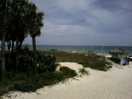 Blue Parrot: View from the covered deck, flowers, sand, Gulf