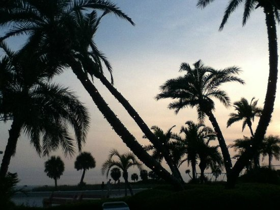 Sea Chest Motel : Lights on the palm trees come on at sunset
