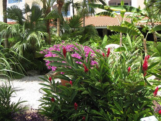 Costa Linda Beach Resort: Gardens