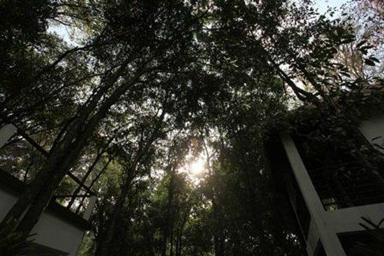 Natura Resort: Garden