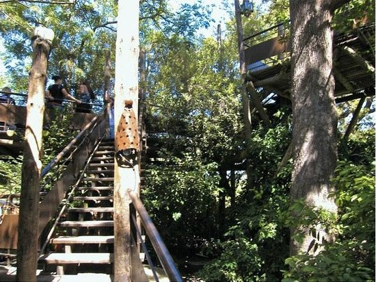 Moyo Stellenbosch: Stairs To Treehouse Seating
