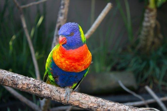 SunSquare Montecasino: Bird park