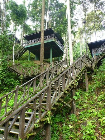 Tabin Wildlife Resort: Hill Room