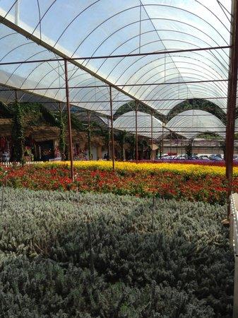 Brinchang, Malaisie : The garden