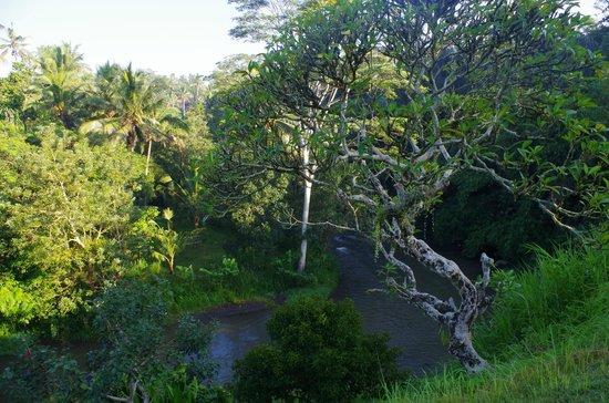 Villa Semana : Территория