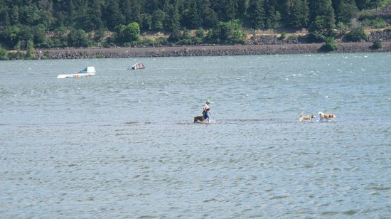 Hood River, OR: Walking the dog on water